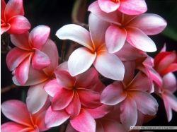 Цветы картинки телефона 7
