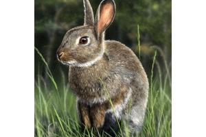 Картинки животные леса