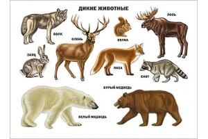 Картинки животные леса 3