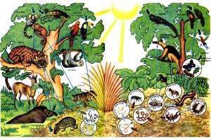Картинки животные леса 4