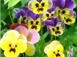 Красивые макро картинки и фото полевых цветов 7