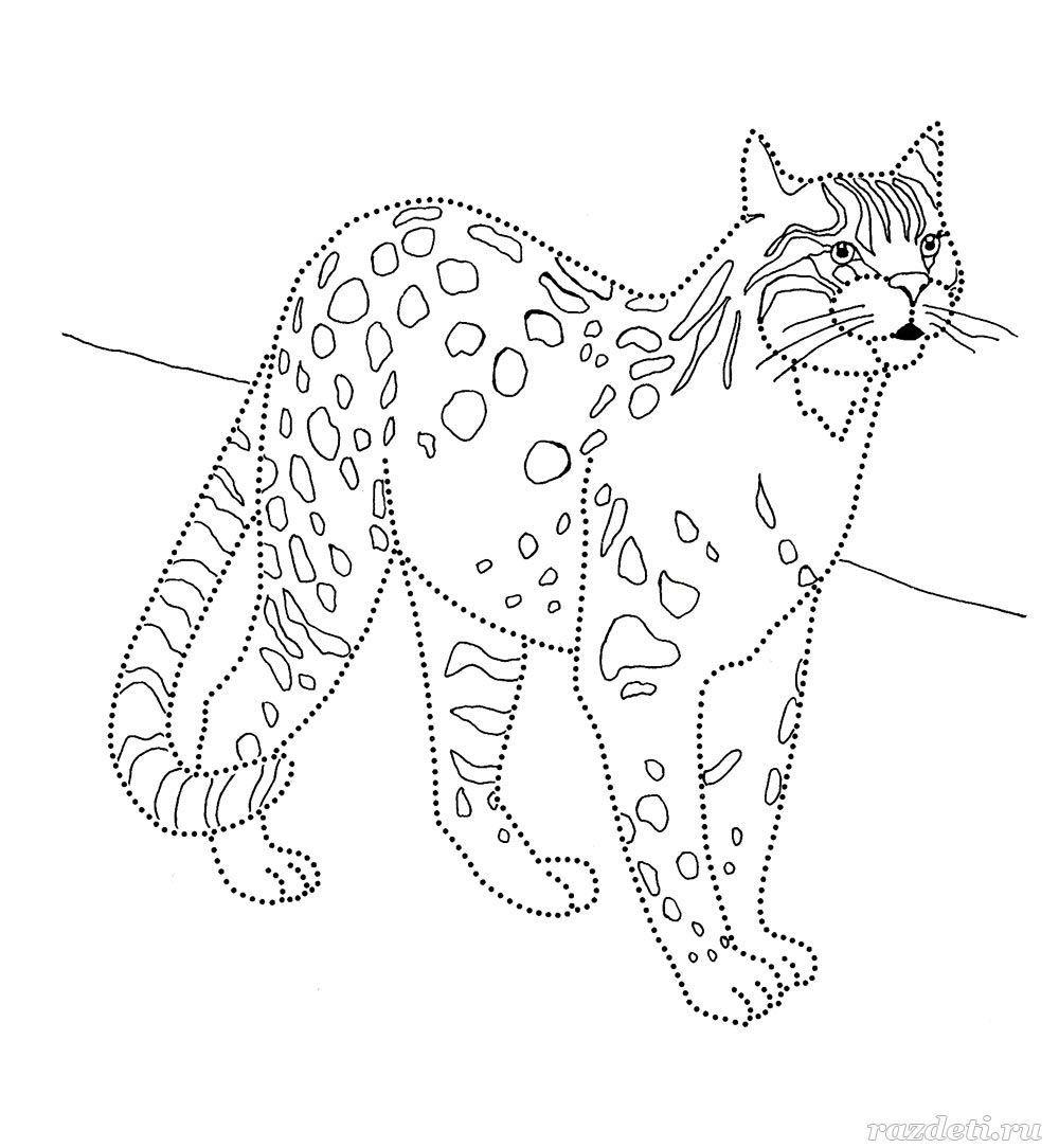 самый бенгальский кот картинки раскраски приготовить