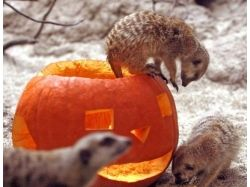 Хэллоуин картинки для детей 7