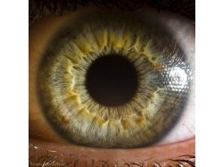 Макрофотографии человеческих глаз