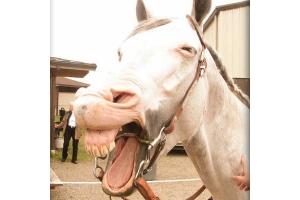 Смешные фото лошади