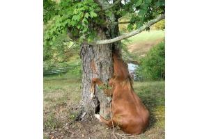 Смешные фото лошади 3