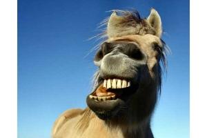 Смешные фото лошади 6