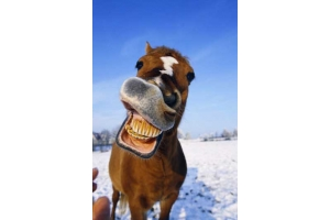 Смешные фото лошади 8