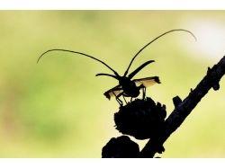 Усачи насекомые фото