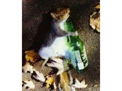 Алкоголь смешные картинки