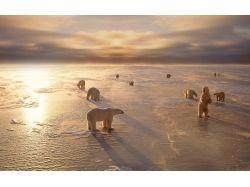 Картинки зима и животные 7