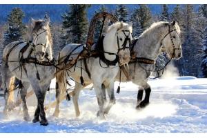 Фотографии лошадей зимой 1