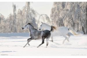 Фотографии лошадей зимой 2