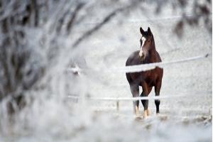 Фотографии лошадей зимой 4