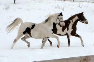 Фотографии лошадей зимой 5