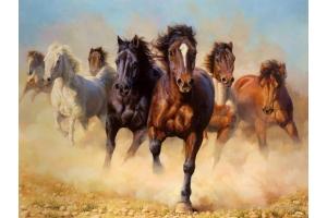 Фотографии лошадей зимой 7