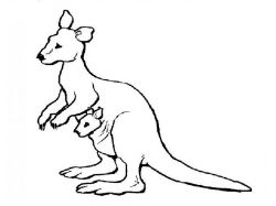 Древесный кенгуру - раскраски для детей 7
