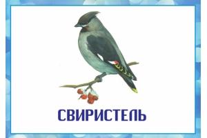 Фото зимующих птиц с названиями 1