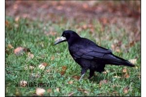 Фото зимующих птиц с названиями 3