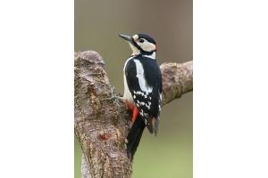 Фото зимующих птиц с названиями 4