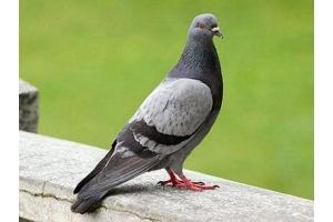 Фото зимующих птиц с названиями 8