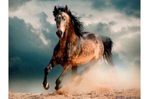 Мустанг лошадь фото