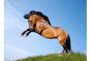 Мустанг лошадь фото 3