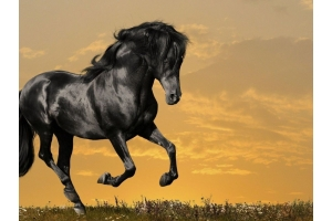 Мустанг лошадь фото 5