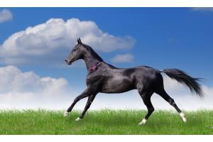 Мустанг лошадь фото 6