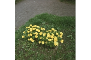 Лекарственные травы башкирии 6