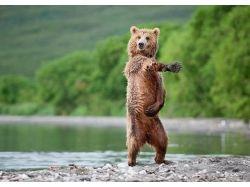Фото медведей прикольные
