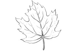 Кленовый лист рисунок 7