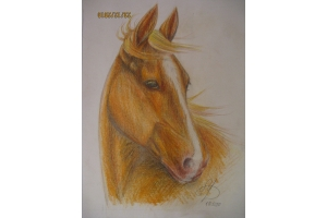 Смешные рисунки лошади 4