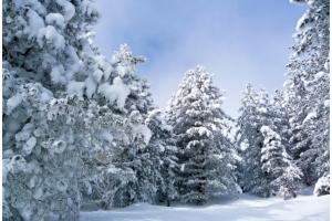 Фото девушек в лесу зимой 3