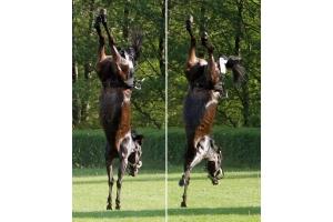 Смешные лошади рисунки 7