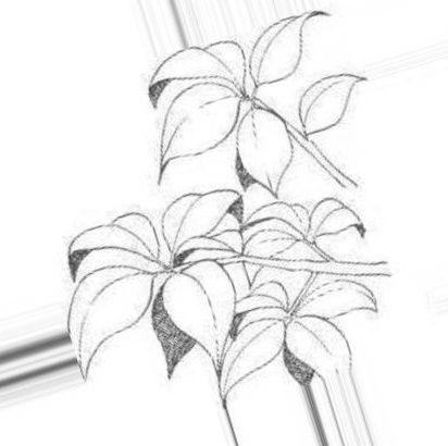 Легкие красивые картинки для срисовки цветы