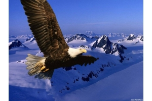 Орел птица фото
