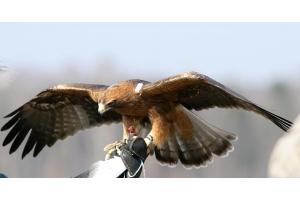 Орел птица фото 2