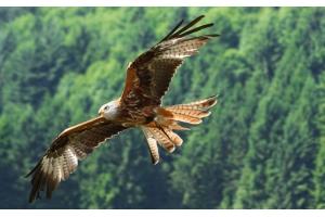 Орел птица фото 4