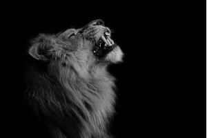 Фото король лев 2