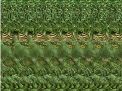 Стереокартинки динозавры 7