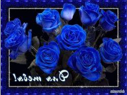 Блестящие картинки цветы гвоздики 7