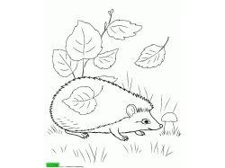 Лисица - раскраски для детей 7