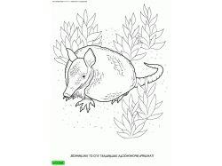 Лисица - раскраски для детей 6