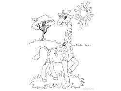 Серая куропатка - раскраски для детей 4
