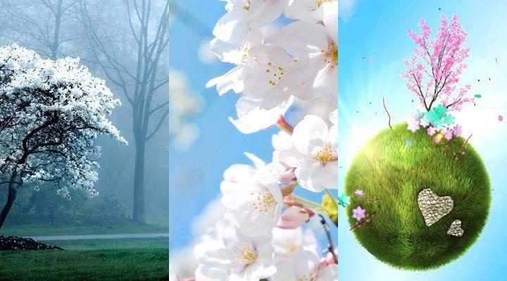 Аватарку, тройные картинки и анимации
