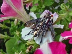 Насекомые осы фото