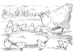 Великолепная райская птица - раскраски для детей 3