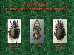 Фото насекомых из красной книги