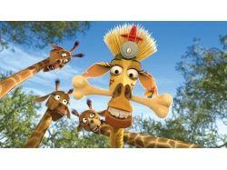 Мадагаскар мультик картинки